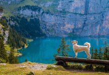 טיול בטבע עם הכלב