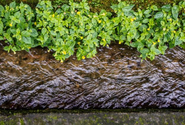 כיצד נמנעים מהצפות ומה עושים כשיש הצפה
