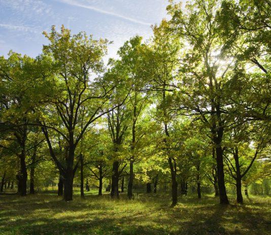 למה כדאי לבצע סקר עצים לפני קבלת היתר בנייה